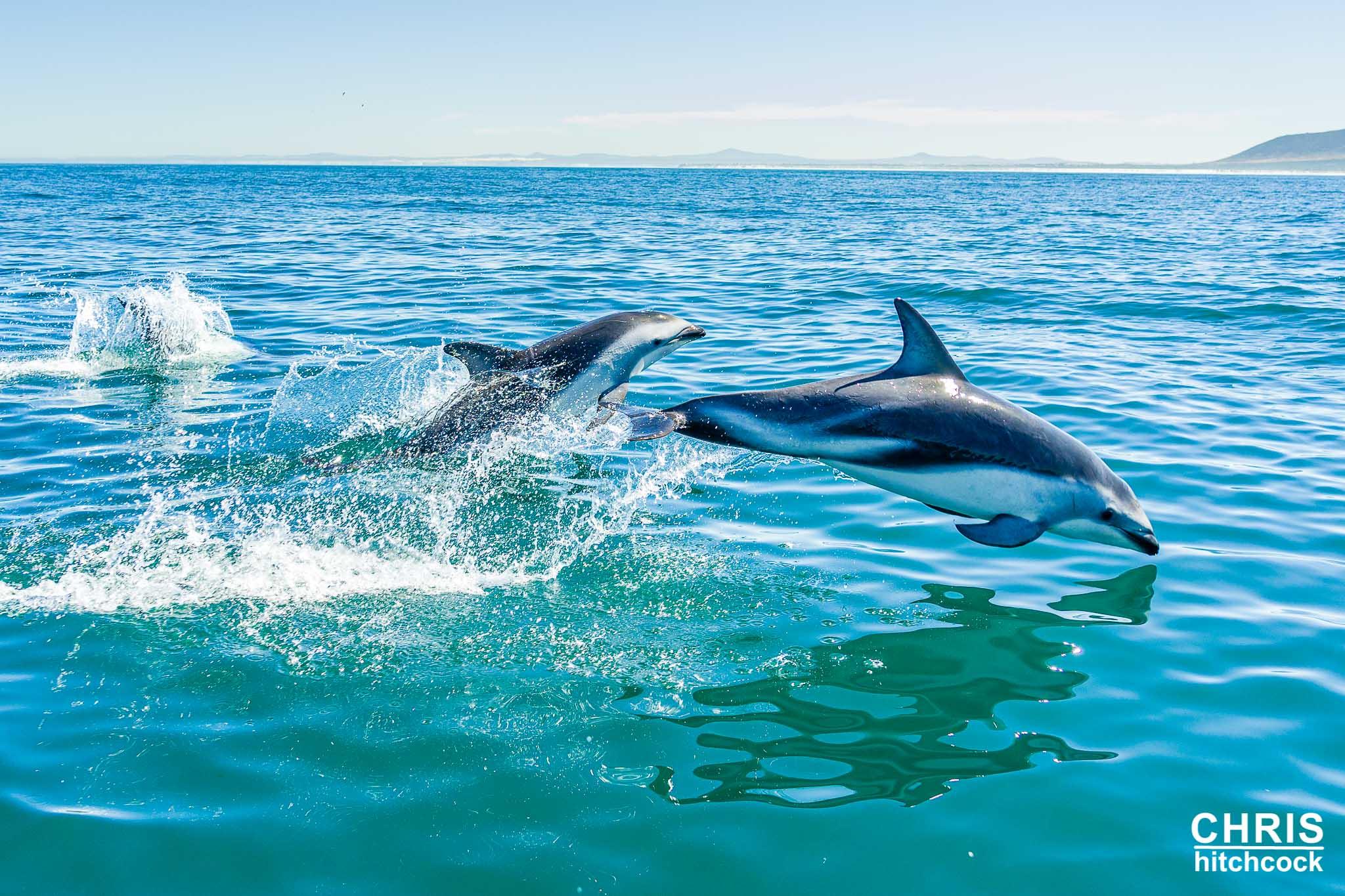 photograph a dolphin
